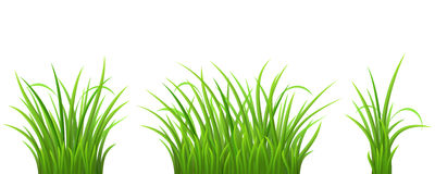 Tufts of grass clipart.
