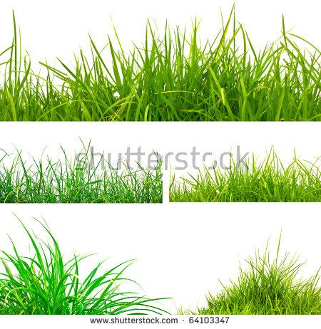 Grass Isolated Stock Photos, Royalty.