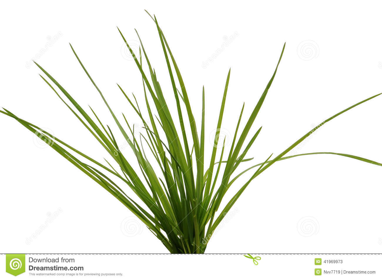 Tuft Green Grass Stock Photos, Images, & Pictures.