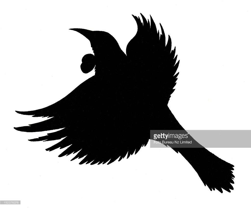 Tui Bird Silhouette.