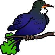 Tui Bird Clip Art images at pixy.org.