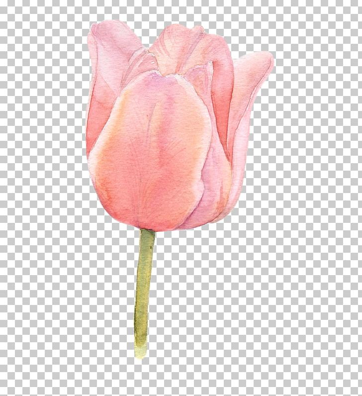 Flower Tulip Watercolor Painting PNG, Clipart, Botanical.