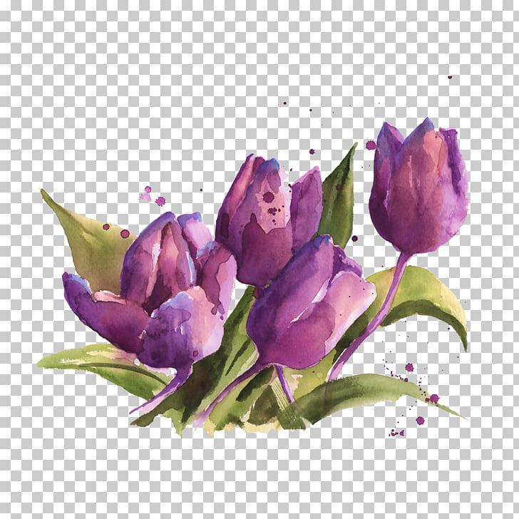 Floral design Watercolor painting Flower, Tulip material.
