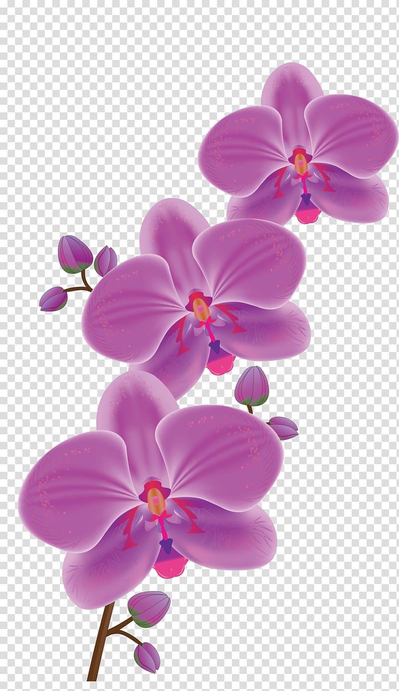 Pink flowers, Orchids Flower Phalaenopsis schilleriana.