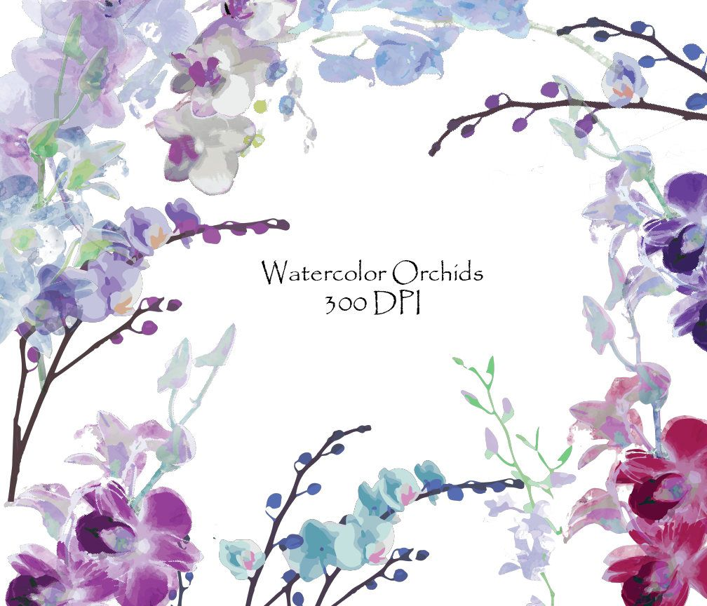 Watercolor Orchids Clip Art High Resolution Graphic Digital.