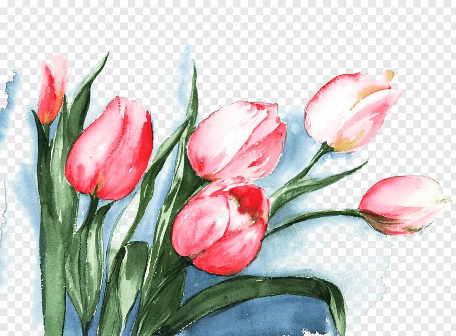 Pink tulip flowers painting, Tulip Watercolor painting.