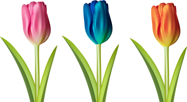Tulip flower vectors free vector download (9,566 Free vector) for.