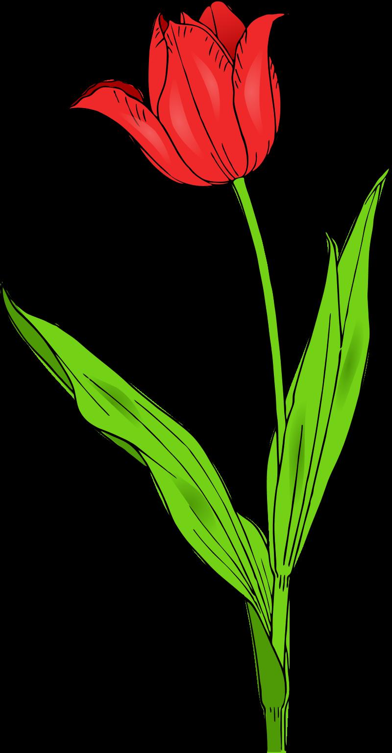 187 Flower Clipart.