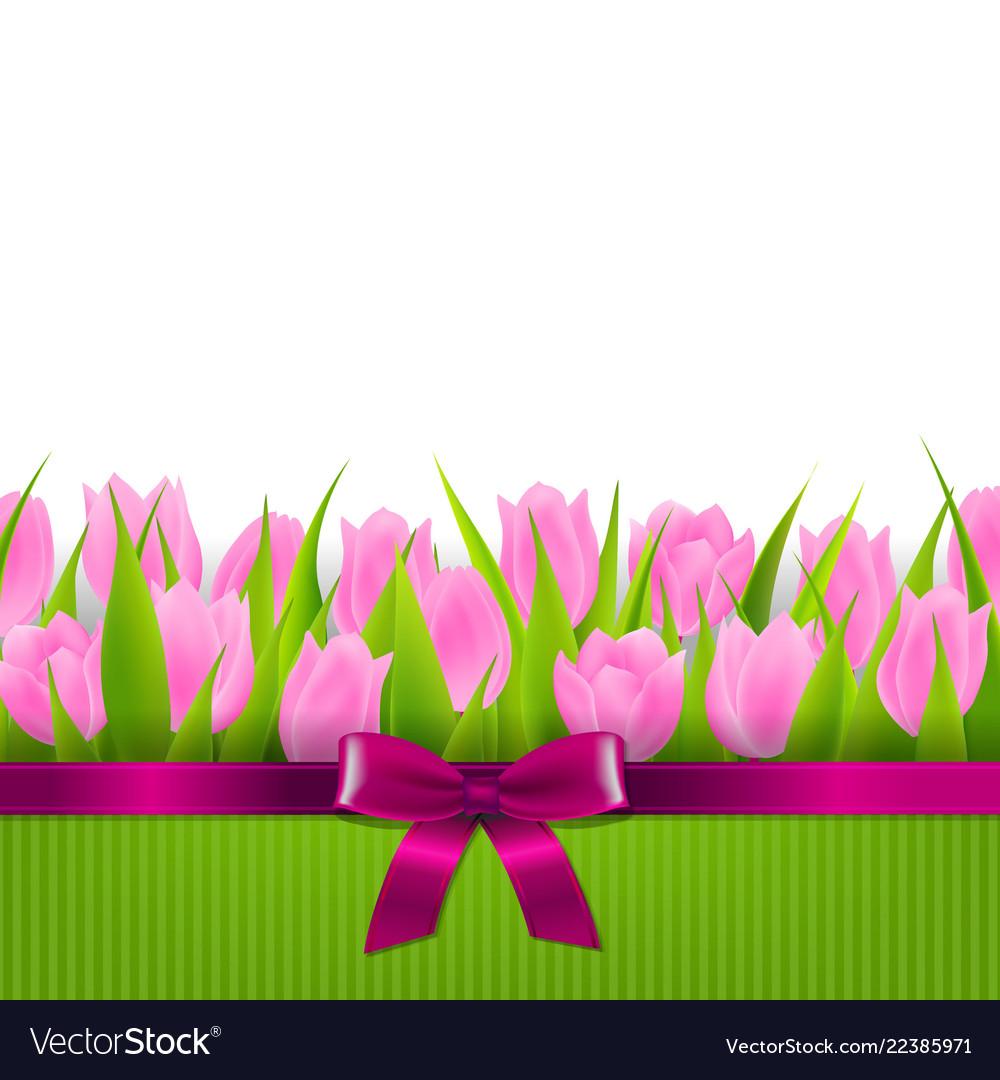 Tulip border.