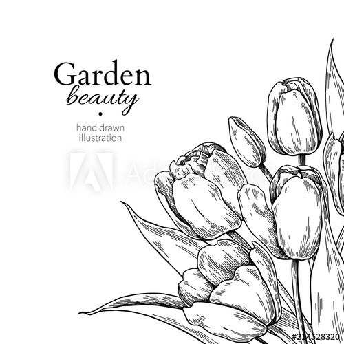 Tulip flower and leaves drawing border. Vector hand drawn.