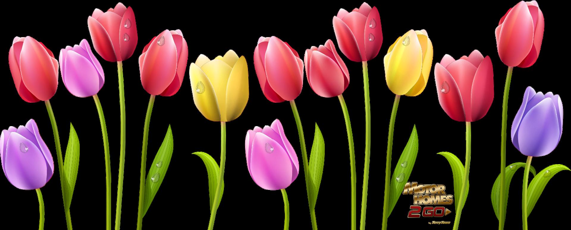 Clipart free tulip, Picture #526738 clipart free tulip.