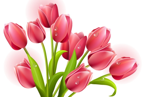 Tulips Bouquet Vector clip arts, clip art.