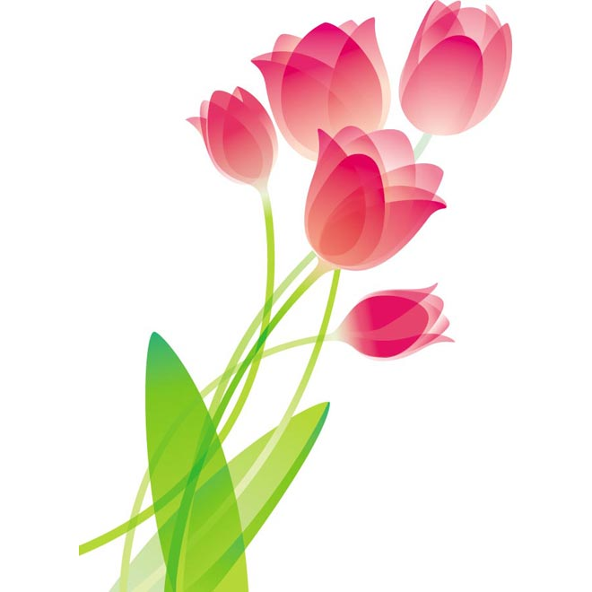 Bouquet of tulips clipart.