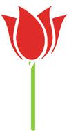 High Altitude Gardening: Tulip Mania.
