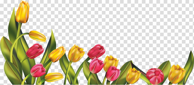 RES Tulip Border, yellow and pink tulip flowers illustration.