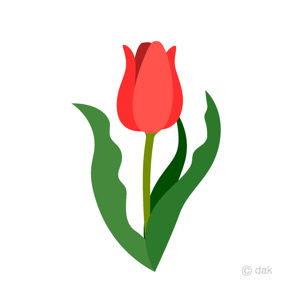 Free Red Tulip Clipart Image|Illustoon.