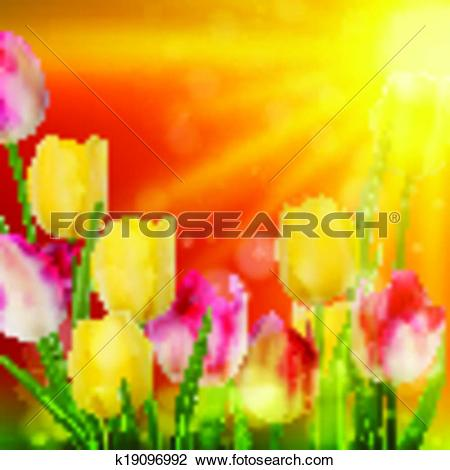 Clipart of Tulip Field during Sunset. EPS 10 k19096992.