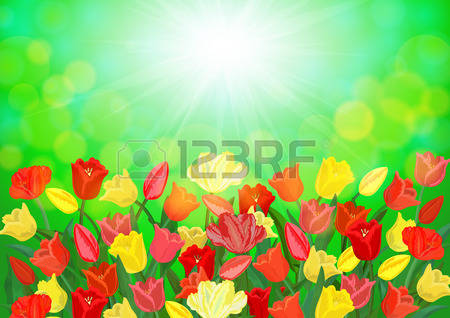 2,410 Tulip Field Stock Vector Illustration And Royalty Free Tulip.