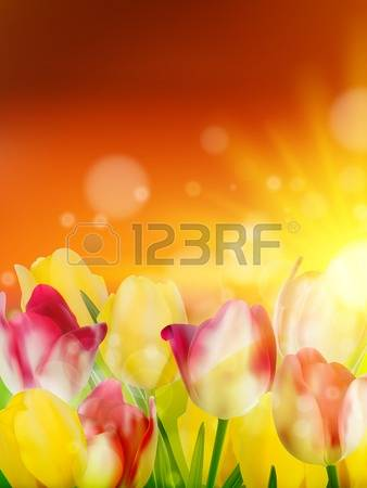2,183 Tulip Field Stock Vector Illustration And Royalty Free Tulip.