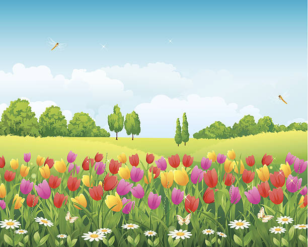 Tulip Field Clip Art, Vector Images & Illustrations.