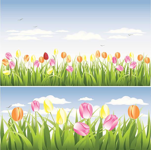 Tulip Field Clip Art, Vector Images & Illustrations.
