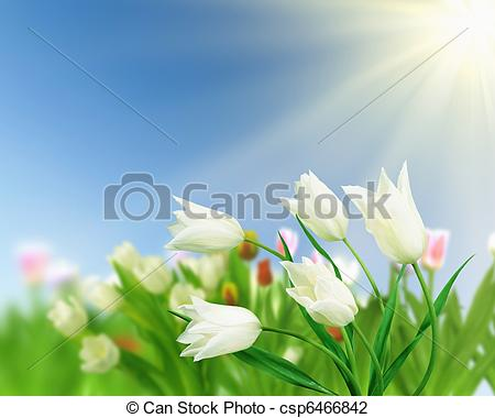 Clip Art of tulip flower fields.