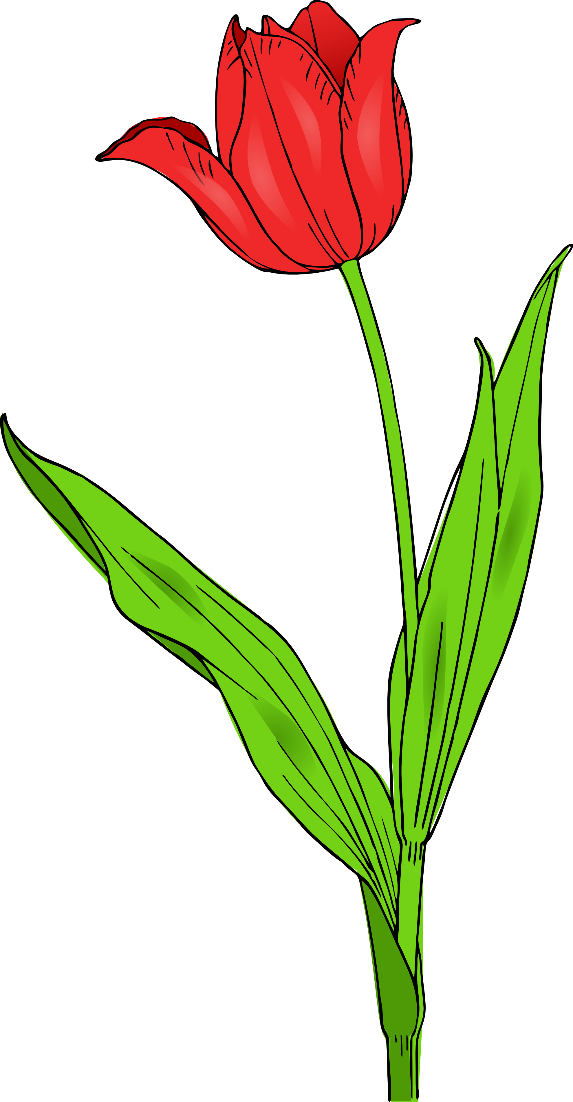 Free Free Tulip Cliparts, Download Free Clip Art, Free Clip.