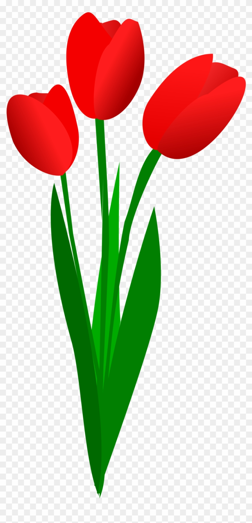 Tulip Clipart Flower Bokeh.