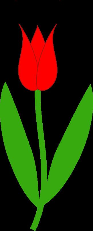Tulip flower clipart.