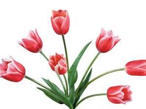 Tulip Clip Art Black And White.
