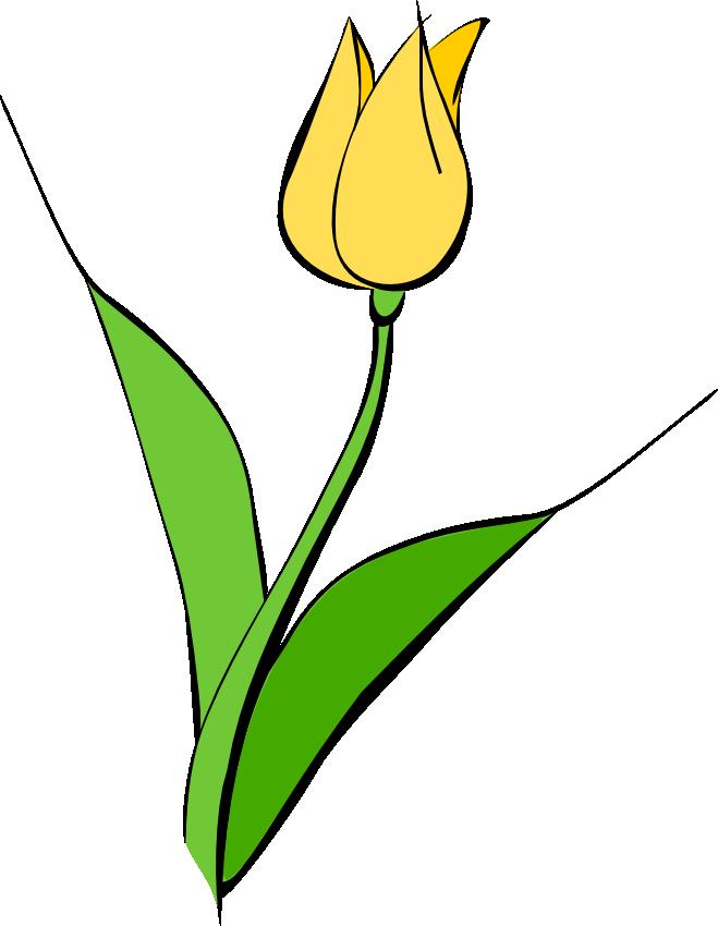 Yellow Tulip Clipart.