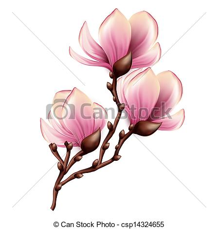 Clipart Vector of Magnolia branch isolated csp14324655.