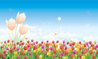 Floral Tulips stock vectors.