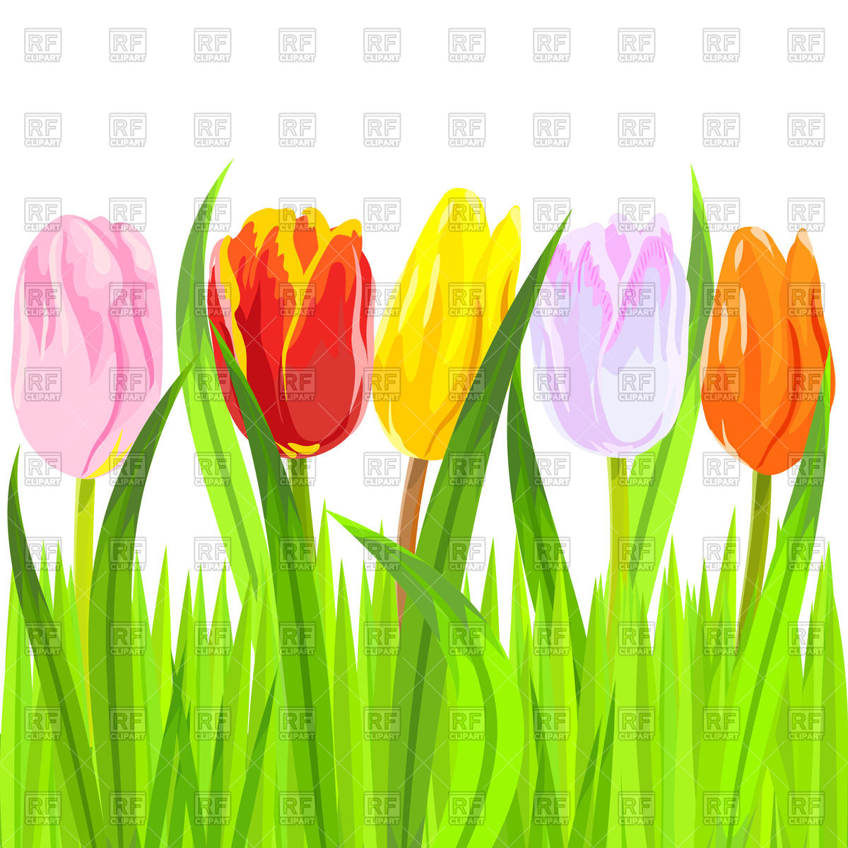 Colorful tulips in a light green grass Vector Image #45096.