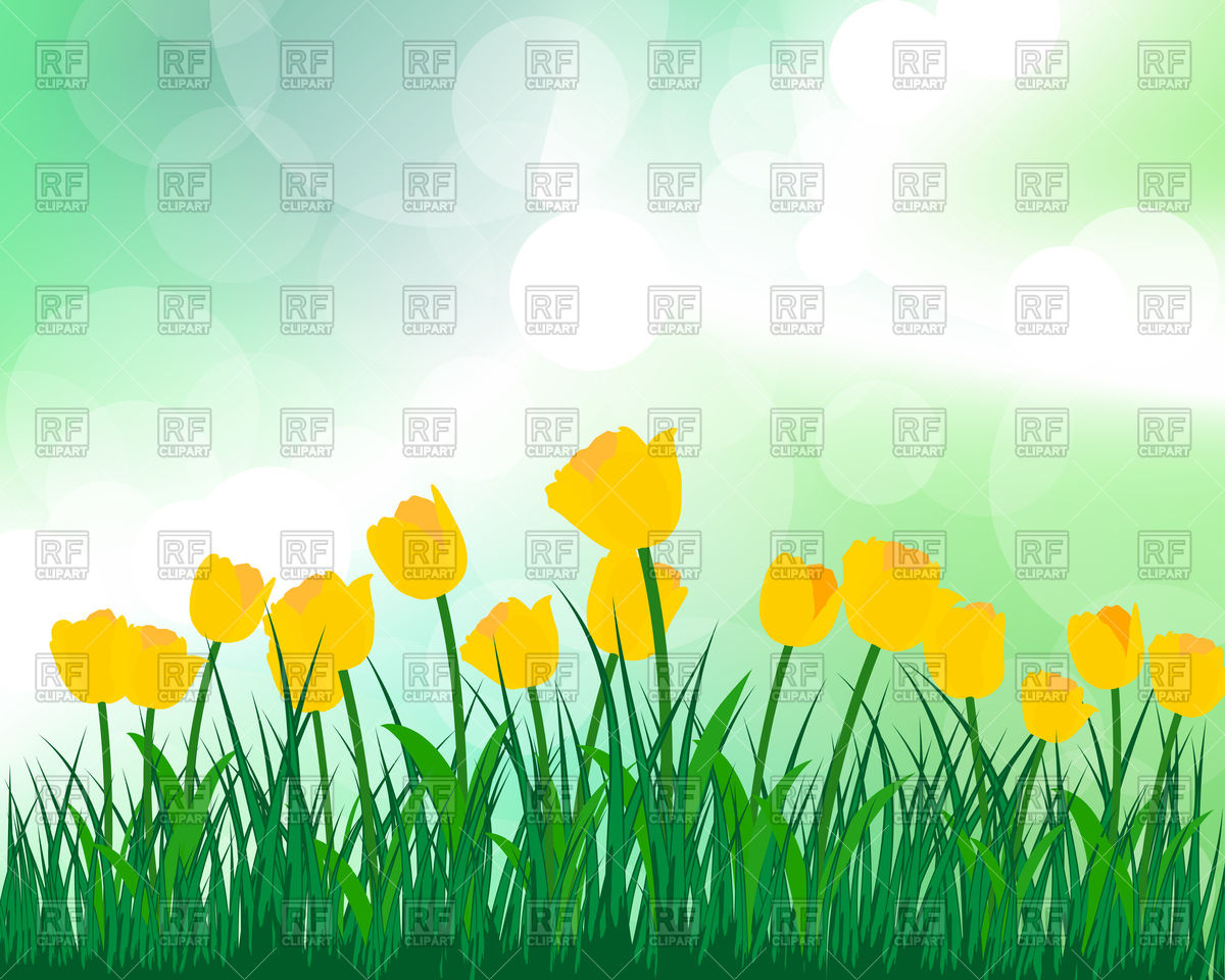 Summer meadow background with yellow tulips Vector Image #107418.