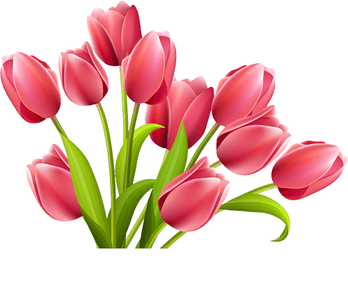 Rose Tulips transparent PNG.