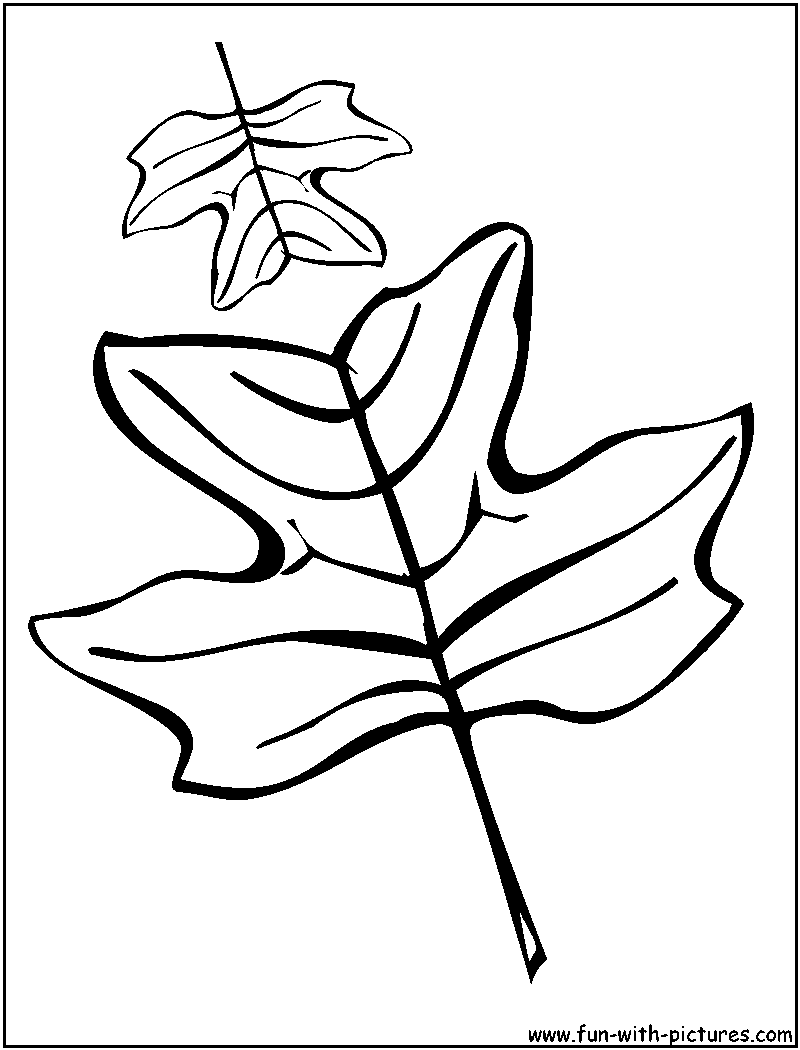 Oak Leaves Coloring Pages.