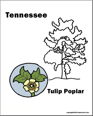 Tennessee: State Tree.