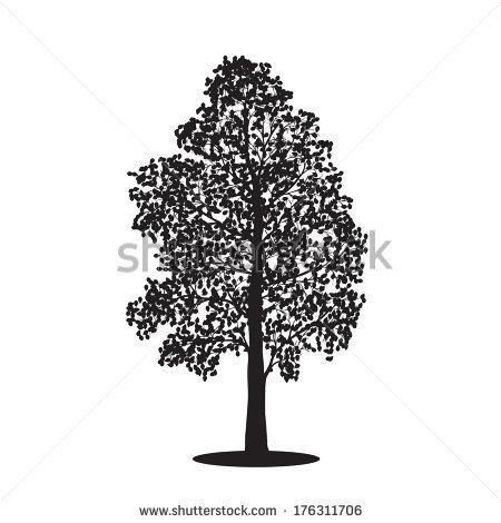 Poplar Tree Stock Images, Royalty.