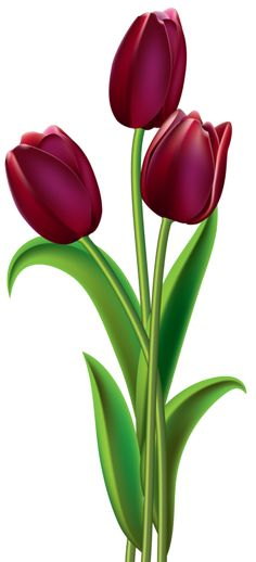 Pink Tulips PNG Clipart.