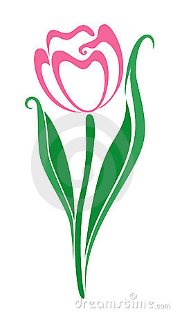 Tulip Flower Stock Images.