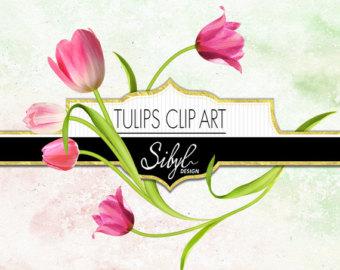 Tulip clipart.