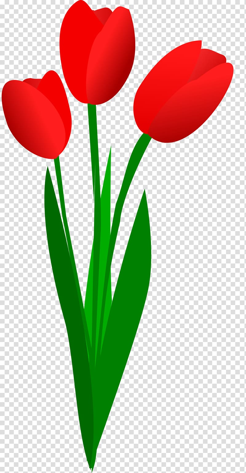 Tulip Free content Flower , Tulip Bouquet transparent.