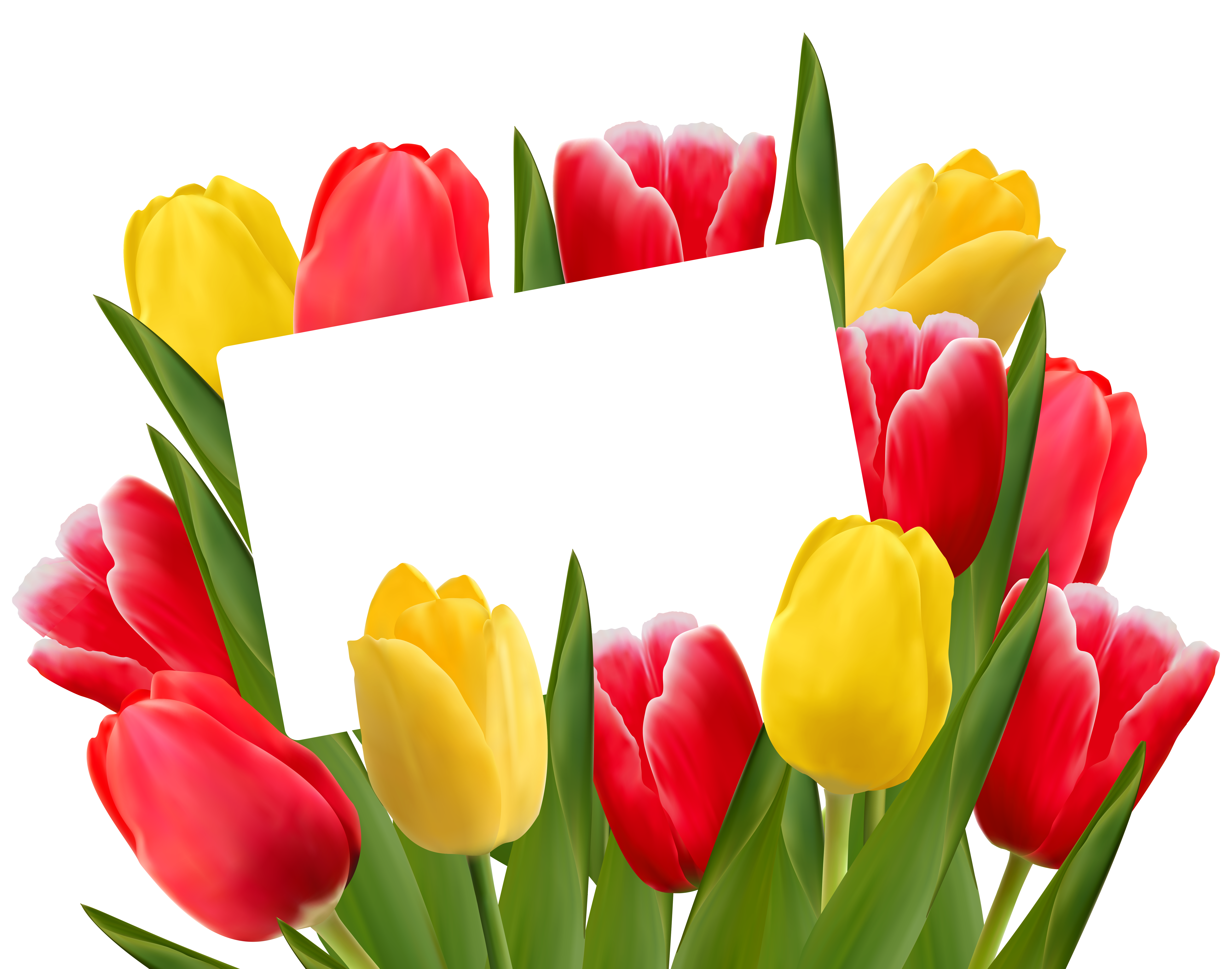 Free Yellow Tulip Cliparts, Download Free Clip Art, Free.