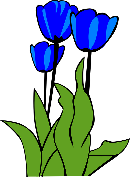 Free vector graphic: Tulips, Flowers, Plant, Leaves.