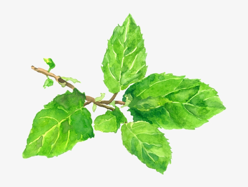 "Tulsi, The Sacred Plant ""symbol Of Purity"" For Purified."