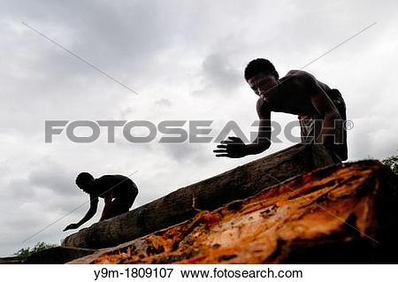 Picture of Colombian sawmill workers roll a log from the Pacific.