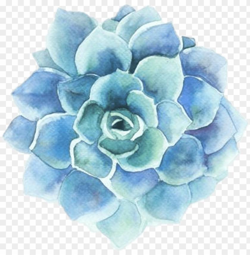 flower clipart tumblr.