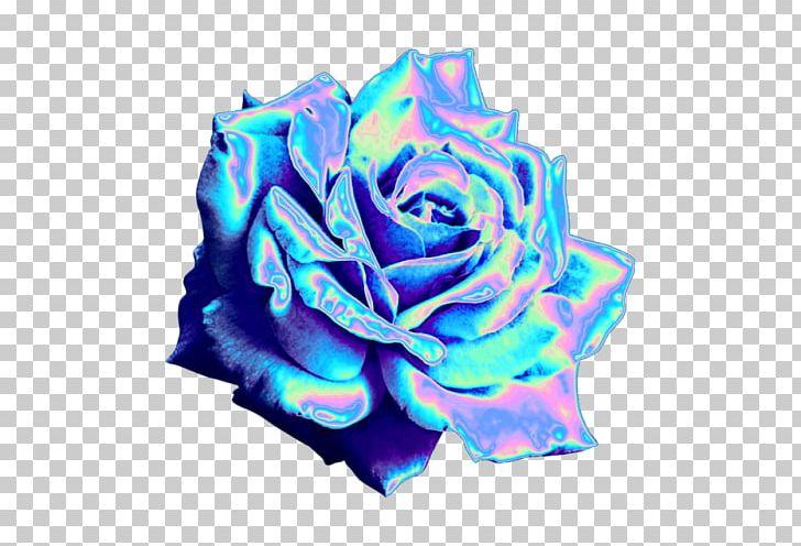 Blue Rose Garden Roses Tumblr Blog PNG, Clipart, Blue, Blue.
