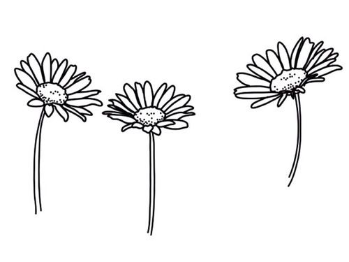 basic, black and white, flowers, pretty, transparent, tumblr.